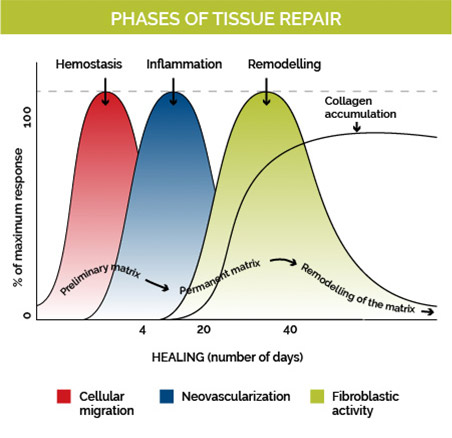 prolotherapy tissue repair phases